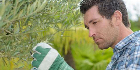 3 Ways a Professional Tree Service Helps Maintain Foliage, Athens-Clarke, Georgia