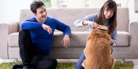 5 Essential House Cleaning Tips for Pet Owners, Atlanta, Georgia