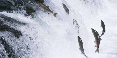 5 Fish You Might Spot on Your Private Charter in Alaska, Juneau, Alaska