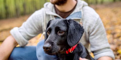 3 Ways Pets Improve Our Health, Mill City, Oregon