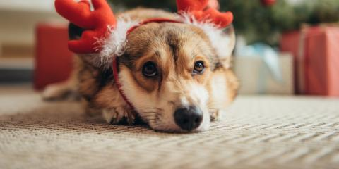 4 Tips for Keeping Your Carpets Clean Over the Holidays, West Lake Hills, Texas