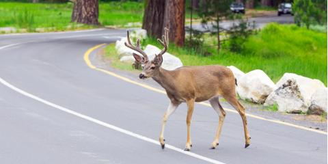 What All Motorists Should Know About Wildlife Collisions, Cincinnati, Ohio