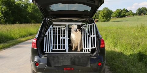 How to Keep Your Dog Safe While Traveling in a Car, Lincoln, Nebraska