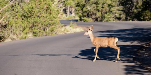 """Why You Should """"Give Wildlife a Brake"""" This Fall, Dothan, Alabama"""