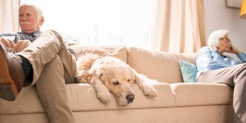 What Happens to Pets in a Divorce?, Ozark, Missouri