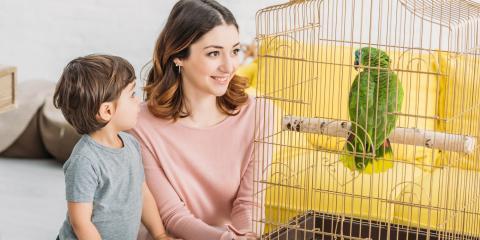 What Is Psittacine Beak and Feather Disease?, Batavia, Ohio