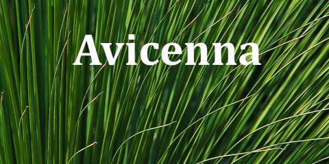 Avicenna Acupuncture & Lymphedema Clinic in Denver, CO | NearSay