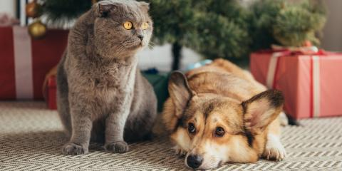 Holiday Food Safety for Pets: What You Need to Know, Avon, New York