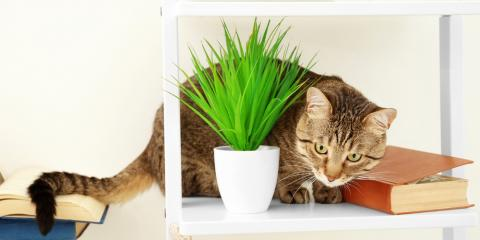 Pet Health Question: Which Plants Are Harmful to Your Dog or Cat?, Avon, Ohio