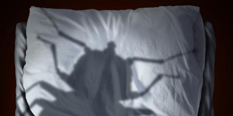 An Exterminator's Guide to Bedbug Bites, Trenton, Ohio