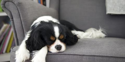 4 Reasons to Clean Upholstery in a Home with Pets, Goshen, New York