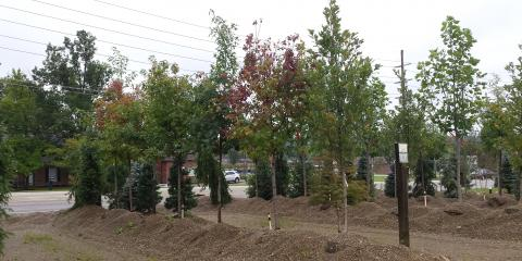 THE TREE SALE YOU'VE BEEN WAITING FOR AT LAKEVIEW !!, Fairfield, Ohio