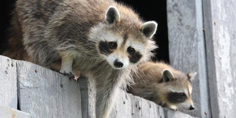 Ohio's Wildlife Removal Experts Recommend Using Fencing to Keep Unwanted Guests Out, Miami, Ohio