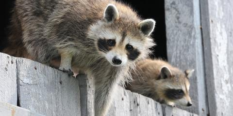 3 Reasons to Leave Wild Animal & Pest Control to the Experts, North Hempstead, New York