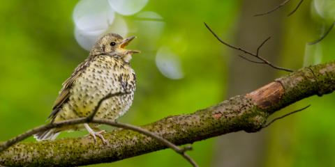 How to Create a Backyard Birding Summer Oasis in St. Louis, Jefferson, Missouri