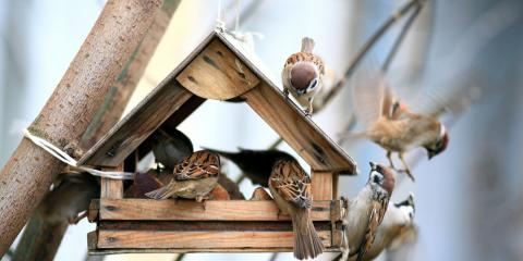 Backyard Birding: How to Woo a Variety of Birds to Your Home, Jefferson, Missouri