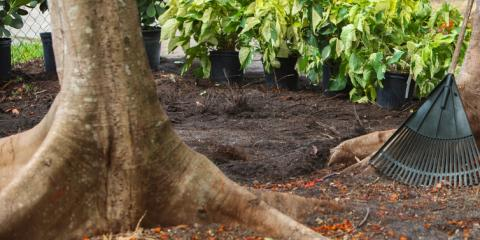 Backyard Landscaping 101: 5 Signs of an Unhealthy Tree , Mukwonago, Wisconsin