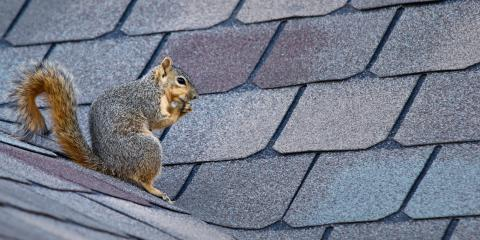 A Guide to Squirrel Roof Damage, Fairplay, Colorado