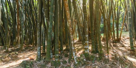 A Guide to Bamboo Remediation, Jessup, Maryland