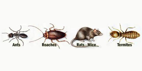 Guarantee Pest Control, Inc., Pest Control, Services, Lexington, Kentucky