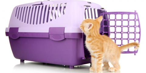 How to Make Cat Boarding Easy With Positive Crate Training, Keaau, Hawaii