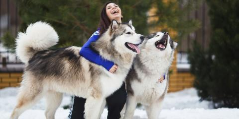 4 Pet Care Tips for Taking Your Dog Out In the Snow, Baraboo, Wisconsin
