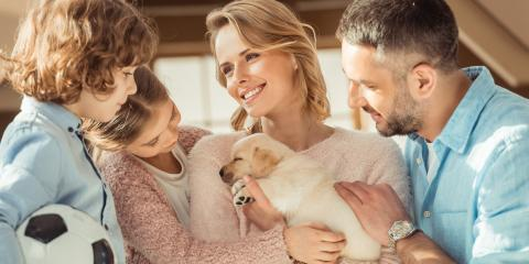 Your Pet Care Guide To Getting a New Animal, Baraboo, Wisconsin