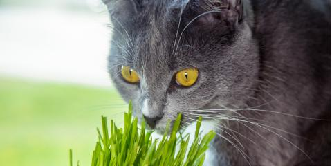 According to Veterinarians, Catnip Isn't the Only Plant Cats Love, Baraboo, Wisconsin