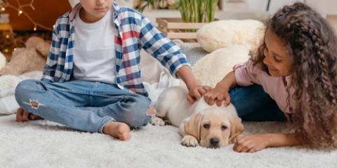 3 Types of Flooring Perfect for Pet Owners, Barnesville, Ohio