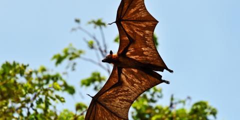 3 Fun Facts About Bats, Miami, Ohio
