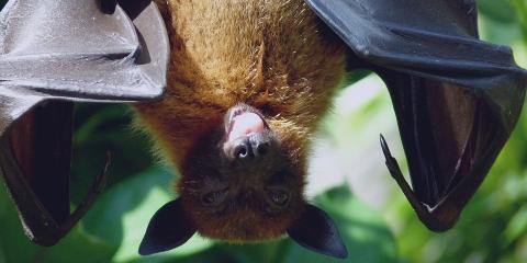 Bats Haunting Your Home? Try These 3 Bat Removal Steps, Brewster, New York