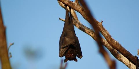 Dale County Bat Removal Experts Share 3 Tips for Keeping Bats Out, Daleville, Alabama