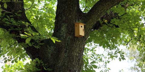 4 Benefits of Bat Houses, New Milford, Connecticut