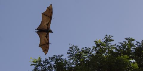 5 Signs You Need Bat Removal, Grand Rapids, Wisconsin