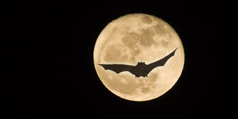 Animal Control Experts Share the Truth About Bats & Halloween, New Milford, Connecticut