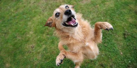 Why Senior Pets Need Semi-Annual Visits to an Animal Clinic, Batavia, Ohio