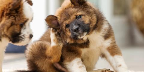 Veterinary Clinic Shares 6 Pet Allergy Signs & Tips, Batavia, Ohio