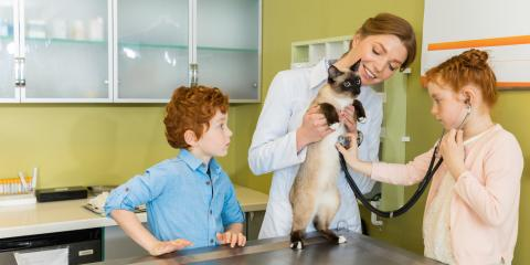 FAQ About Pet Vaccinations for Your Cat, Batavia, Ohio