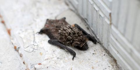 3 Common American Bat Species in Ohio, Miami, Ohio