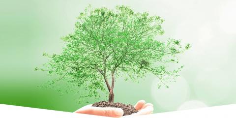 BCS Tree Service, Tree Service, Services, La Crosse, Wisconsin