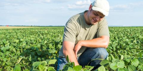 3 Tips for Protecting Your Crops From Pest Infestations, Beatrice, Nebraska