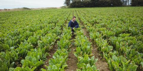 A Basic Guide to Understanding Multi-Peril Crop Insurance , Beatrice, Nebraska