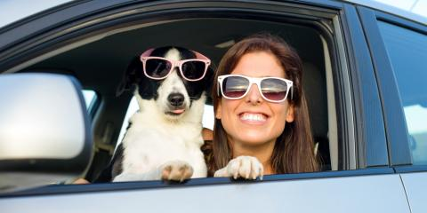 3 Tips for Safely Moving With Pets, Rochester, New York