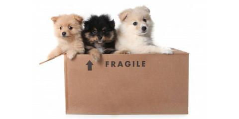 Prepare Your Furry Friends For The Big Move With Becker Movers, Rochester, New York