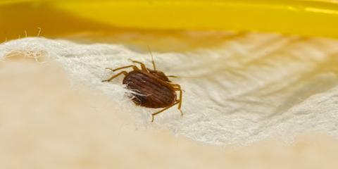 When Is Peak Season for Bed Bugs?, Hebron, Kentucky