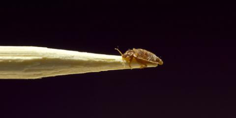 Can pest control get rid of bed bugs, Mobile, Alabama