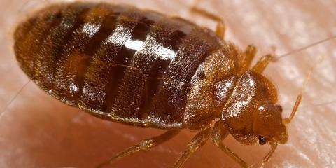 BEDBUG HEAT REMEDIATION: Why it is a great treatment option, Lexington-Fayette, Kentucky