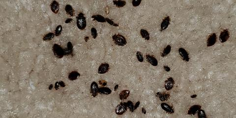 The Worst Case of Bed Bugs We've Ever Seen, Jasmine Estates, Florida