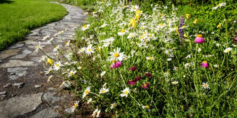 3 Tips for Planting Pollinator Gardens, Fairfield, Ohio