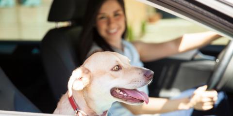 4 Pet Travel Car Safety Tips From Your Local Hyundai Car Dealership , Bellevue, Nebraska